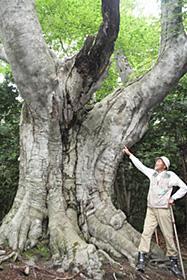 巨大な幹回りで圧倒的な存在感を示す「まほろばのブナ」=いずれも青森県の白神山地で