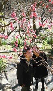 梅の木に見入る来場者ら=静岡市駿河区北丸子の丸子梅園で