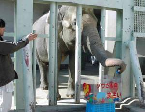占いの練習をするワルダー=名古屋市千種区の東山動物園で