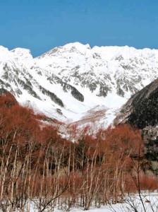 青空に映える冠雪の穂高連峰と赤く色づいたケショウヤナギ(手前)=松本市安曇の上高地で