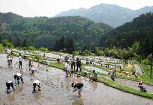 昨年のイベントの様子。山々に囲まれた風光明美な棚田で参加者は田植えに取り組んだ=高島市畑で