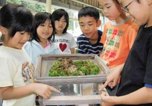 ホタルの成虫を飼育し、繁殖の様子を観察する児童たち=岡崎市鳥川小学校で