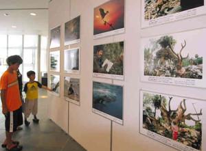 世界中の写真家が撮影した作品が並ぶ会場=日進市の市立図書館で