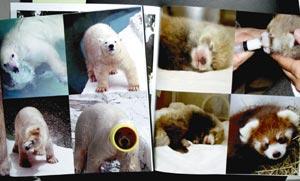 動物たちの愛らしい表情を収めた写真集