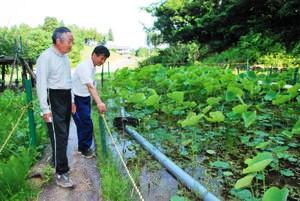 手作りの蓮池を見守る獅子原達雄さん(左)と野村武次さん=越前町小倉で