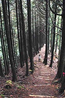 杉木立に囲まれた山道を登る美杉の「霧山コース」