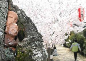 桜の木のくぼみに設置された道祖神=四日市市富田で