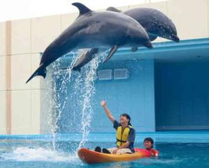 イルカが頭上を飛ぶショー=美浜町奥田の南知多ビーチランドで