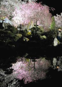 ため池に映る桜のライトアップ=駒ケ根市赤穂の光前寺で