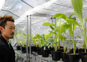 栃尾温泉の熱と蒸気で栽培されているバナナと滋野亮太さん=高山市奥飛騨温泉郷で