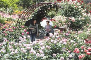 350種の色鮮やかなバラが来園者を包み込む