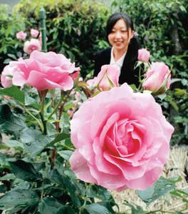 初公開されている淡いピンク色のバラ「プリンセス・ハナコ」=伊勢市の神宮ばら園で