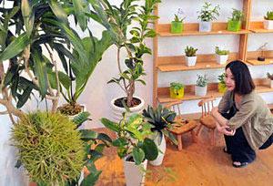 観葉植物が並ぶ会場=金沢市松寺町で