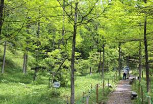 ササユリが咲き始める「みたけの森」