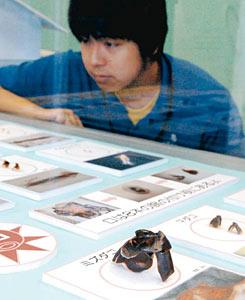 イカやタコの「カラストンビ」を紹介する標本展示=魚津水族館で
