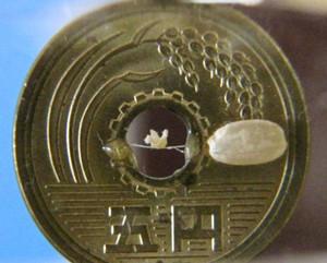 五円玉の穴の中に入る極小の折り鶴=いずれも岐阜市粟野西のギャラリー「淡墨香房」で