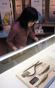 豊富な資料で回遊魚の生態や人とのかかわりを紹介する展示会=関市小屋名の県博物館で