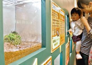 サンショウウオ16種を集めた企画展=各務原市の県世界淡水魚園水族館アクア・トトぎふ