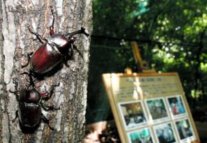 自然界に近い環境でカブトムシを観察できるビートルート138=一宮市のタワーパーク138で