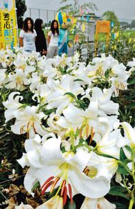 新たに設けられたユリ園で、大きな花を咲かせる「カサブランカ」=各務原市前渡西町の各務原浄化センターで
