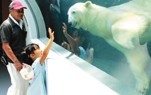 復帰して元気いっぱいの姿を見せるロッシー=日本平動物園で