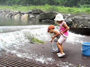 アユのつかみ捕りをする子どもたち=「美山観光やな」で