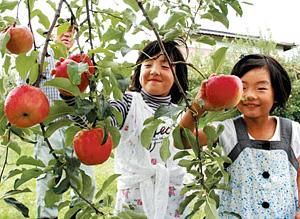 子どもと楽しめるリンゴ狩り(林農園で)