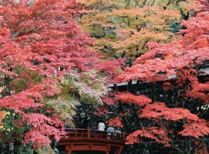 見ごろを迎え色鮮やかに染まる紅葉=揖斐川町の横蔵寺で