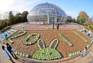 葉ボタンで作った来年のえとウサギ=坂井市丸岡町の県総合グリーンセンターで