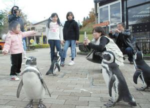 ペンギンと記念撮影をする来園者=能美市のいしかわ動物園で