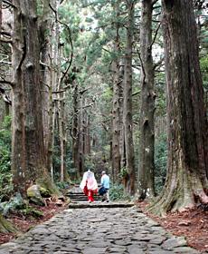 うっそうとした杉並木が続く大門坂