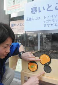 水槽の中でカエルが眠る場所を指し示す担当者=各務原市川島笠田町のアクア・トトぎふで