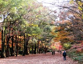 原生林が生い茂る下鴨神社の糺の森