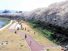 足羽川の桜並木(提供写真)