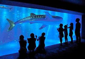 悠然と泳ぐジンベエザメ(のとじま水族館提供)
