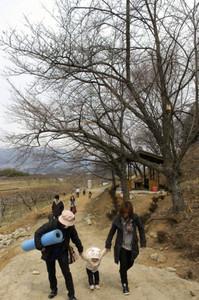 開花を間近に控えた桜並木の遊歩道を歩く来場者たち=喬木村で
