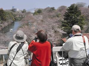 屋上の特設展望台で、高岡古城公園の桜を撮影する人たち=高岡市博物館で