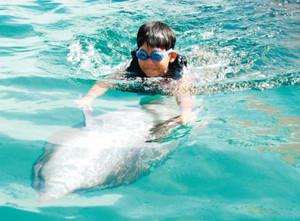「イルカと泳ごう!」の昨年の様子=伊勢市の二見シーパラダイスで(二見シーパラダイス提供)