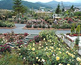 バラを中心に1000種以上の花がある「スイートガーデン」