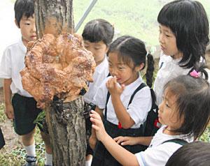 コナラの木に放った後、恐る恐るカブトムシにさわる園児=白山市の県ふれあい昆虫館で