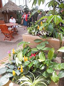 熱帯の植物が飾られた会場=砺波市チューリップ四季彩館で
