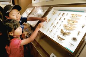 珍しいチョウのほか城内で観察された昆虫も展示されている会場=名古屋市中区の名古屋城で