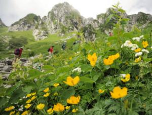 かわいらしい花が彩るカールの花畑=中央アルプス千畳敷カールで
