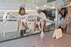 エオドロマエウスの全身骨格標本を眺める来館者=勝山市の県立恐竜博物館で