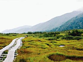 湿地帯に整備された木道の遊歩道
