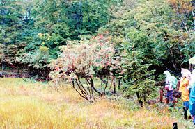 天生県立自然公園内にある高層湿原では、ナナカマドやシラビソの実がたわわになっていた