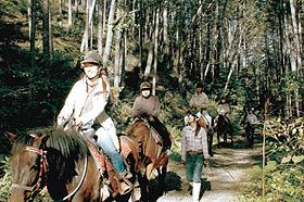 初心者でも木曽馬に乗って林道を散策できる木曽馬トレッキングセンター
