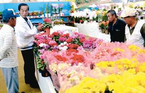 色とりどりの花々が並ぶ会場=米原市のグリーンパーク山東で