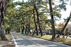 かつてのにぎわいを思わせる「池鯉鮒宿」の松並木