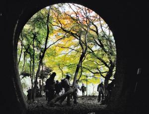 トンネルや色づき始めたモミジを楽しむ来場者たち=春日井市の愛岐トンネル群で